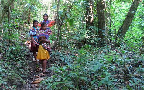 selva zoque wikipedia image gallery lacandona