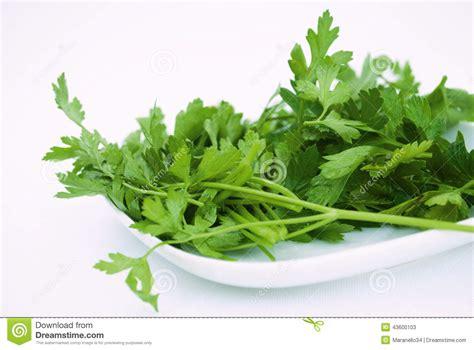 Organic Parsley green organic parsley stock photo image 43600103