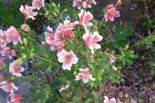 Flower Garden Plants Plants The Budget Gardener S