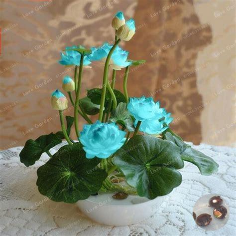 hot sale  pcspack bowl lotus seed hydroponic plants