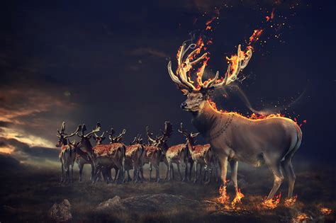 wallpaper deers fire hd creative graphics