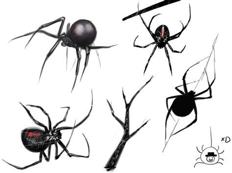 spider sketches by bachanozar on deviantart