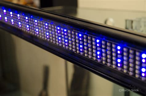 fluval sea 25000k marine and reef light product review hagen fluval sea led light reefs com