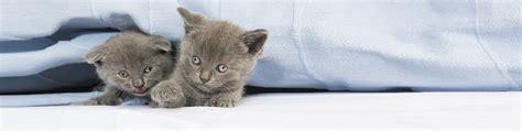 urin auf sofa entfernen urin aus sofa entfernen fettfleck teppich sofa