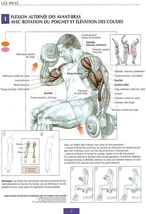 bodybuilding another best bicep workouts