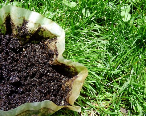 Coffee Grounds For Gardening by Are Coffee Grounds For Lawns Tips On Using Coffee