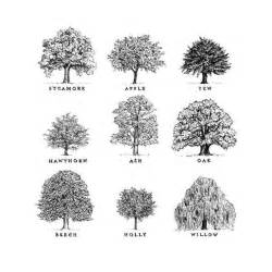 types of trees tree sketches landscape architecture sketches