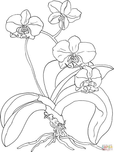 tropical beach coloring pages dibujo de orqu 237 dea polilla o phalaenopsis para colorear