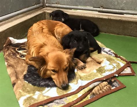 kennel comfort pet motel dog breaks out of kennel to comfort abandoned crying