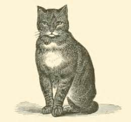 file black and white cat drawing jpg wikimedia commons