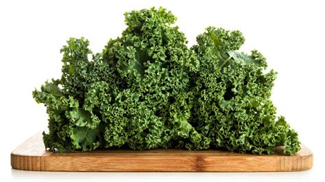broccoli bad for dogs can dogs eat broccoli cabbage kale and cauliflower barking royalty