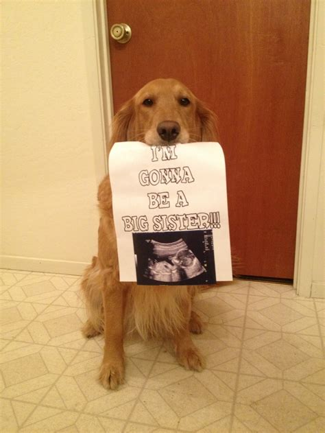 puppy announcement pregnancy announcement with my grossesse