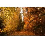 Wallpaper Path Autumn Trees Forest Trail Fall