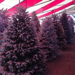 battaglia ranch christmas tree farm san martin ca