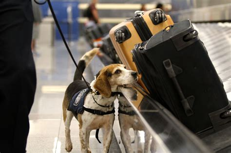 Jo In Dogs Out Kettle Intl one fix for growing airport lines more dogs pittsburgh