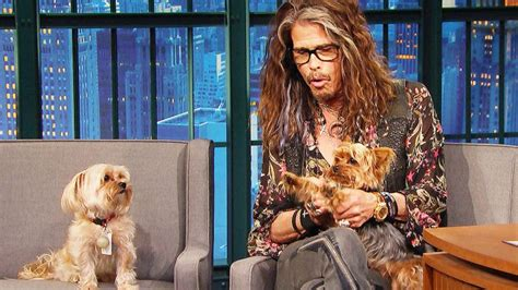 steven tylers dogs unexpectedly crash  interview  steal  showthis  hilarious