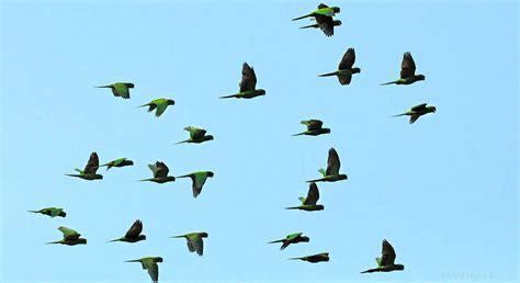 more birding