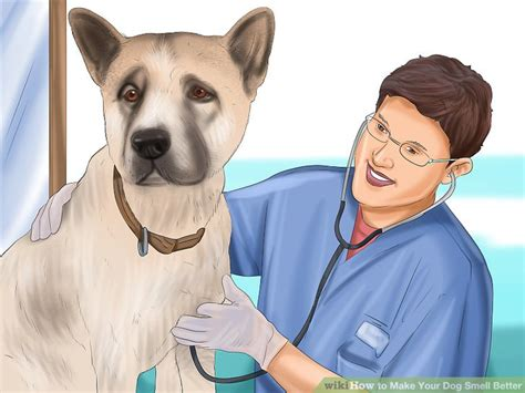 how to make dogs breath smell better 5 ways to make your smell better