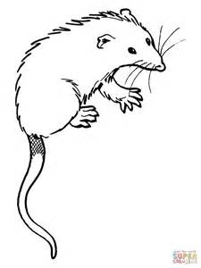 Opossum Coloring Page Opossum Free Coloring Pages