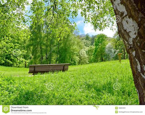 bench in nature park bench in nature stock image image of season natural