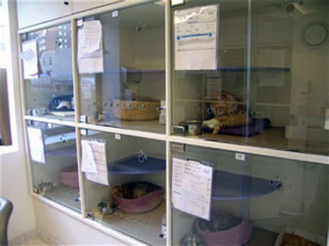 design guidelines for veterinary clinics shelter health assessment 187 maddie s shelter medicine