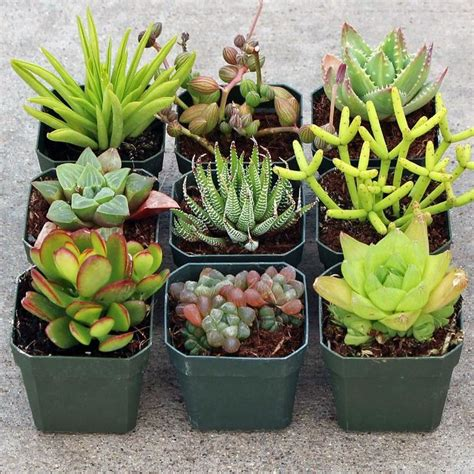 low light succulents best 25 low light houseplants ideas on pinterest indoor