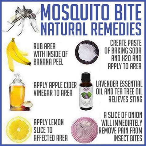 mosquito bite remedies cancer prevention healing