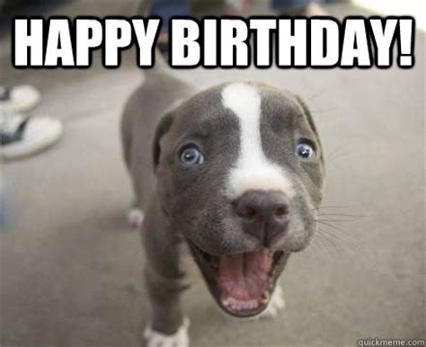 Puppy Birthday Meme - happy birthday animals pinterest happy birthday