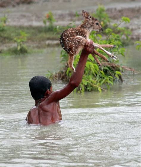 of saving baby deer dramatic moment brave boy risks own to save a baby deer from drowning in raging