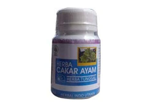 Obat Amandel Alami Dari Tumbuhan obat herbal penyakit liver informasi kesehatan