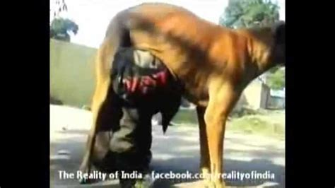 can dogs drink milk uniem starving boy drinks milk from a