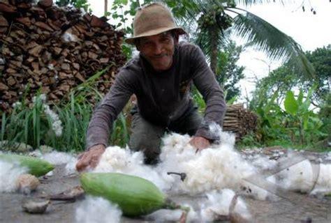 Kasur Kapuk Di Jakarta terobosan baru bisnis kapuk di indonesia perusahaan