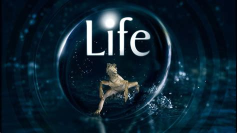 biography documentary series animal life with sir david attenborough betty the