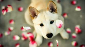 Cute Dogs Wallpapers cute dog wallpapers wallpaper cave