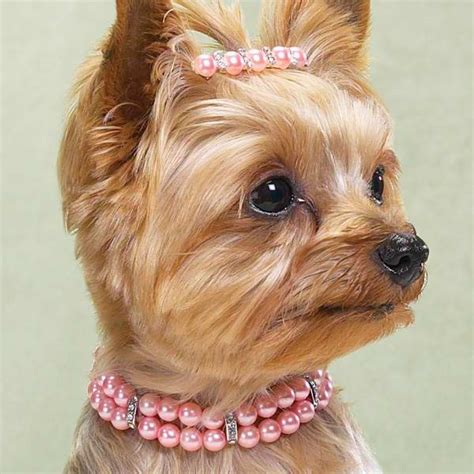 necklace for dogs strand pearl necklace with rhinestones