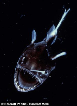 pictured: the incredible deep sea fish discovered under