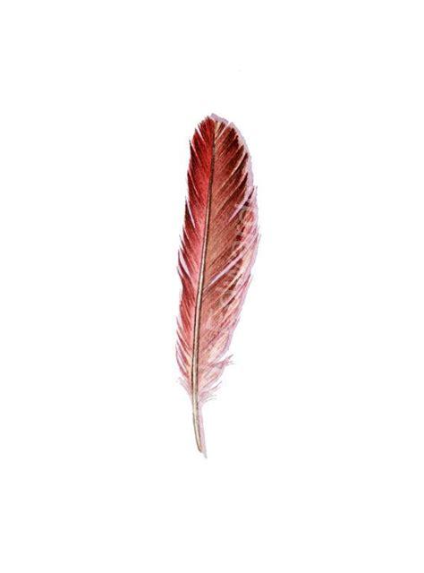 cardinal feather tattoo cardinal feather feather cardinal feather 433