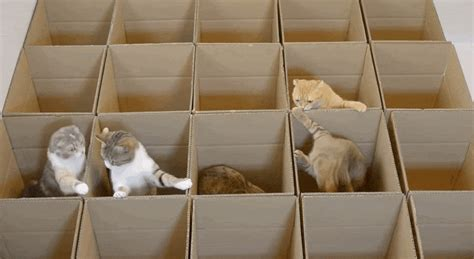 tiny in a box watch these cats frolic in a paradise of boxes