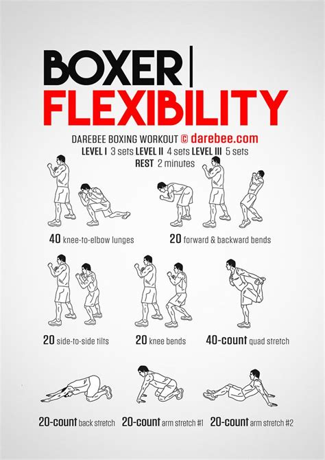 boxer flexibility workout concentration
