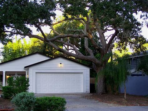 large tree trimming services for large trees near or next