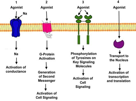 g protein coupled receptors g protein coupled receptor