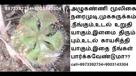 nathai choori plant images sathuragiri malai சத ரக ர மல அப ர வ ம ல க அழ கண ண