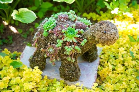 succulent turtle outdoor ideas pinterest turtle shaped topiary planted with moss and hardy