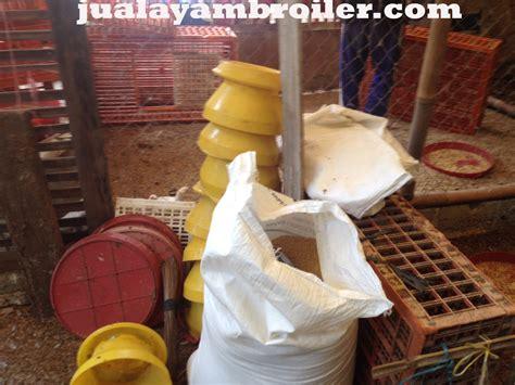 Bibit Ayam Potong Di Bogor jual ayam broiler di tajur bogor jual ayam broiler