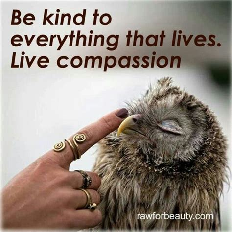 the kindness cure how the science of compassion can heal your and your world books quotes about compassion for animals quotesgram
