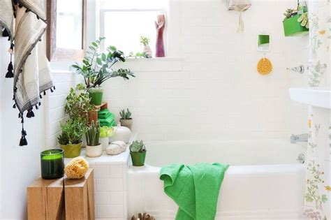 small plants for bathrooms 17 simple ways to beautify a small bathroom without remodeling