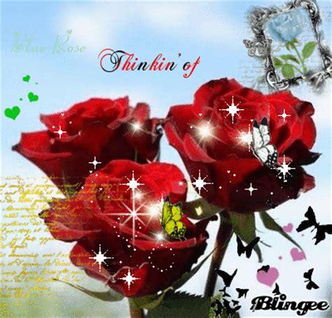 imagenes de rosas lindas preciosas de fondo de pantalla imagenes de lindos fondos de pantalla de rosas en movimiento para ti