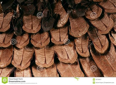 Brown By Dreamcone Soflens texture of brown scales of pine cone stock photo image 49709627