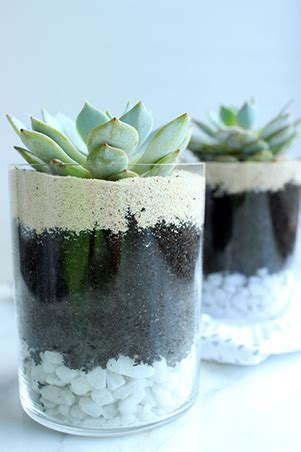 succulents that don t need light rl tips taking care of succulents rl