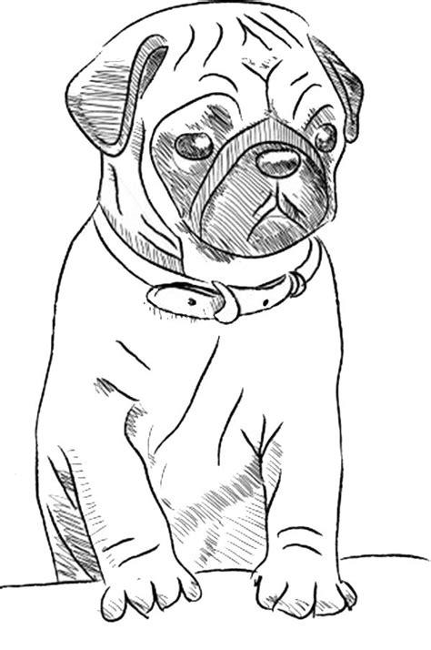 pug puppy coloring pages pug skecth coloring page color